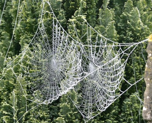 EP Green and web